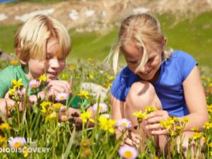 Vail Wildflowers Spring